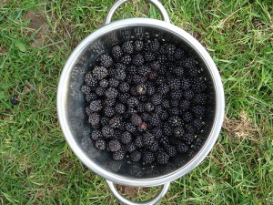 Blackberry bowl, by flickr user ftchris, licensed by Creative Commons.