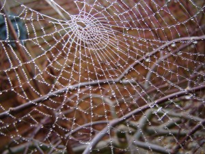 spider web, by flickr user cybershot dude, licensed by Creative Commons